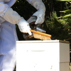 Hive Package Kits