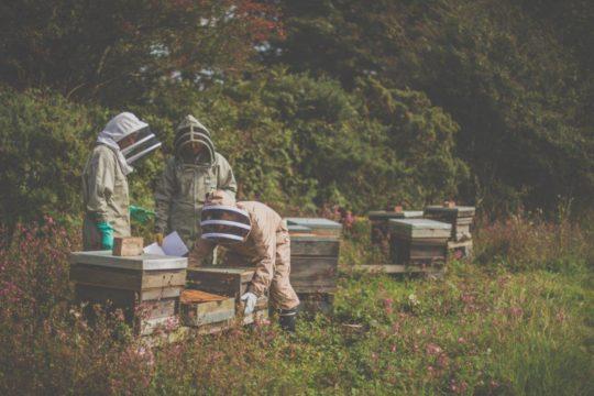 Sherriff Beekeepers Clothing