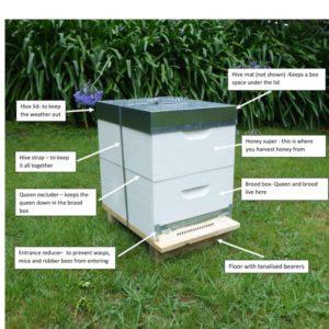 Basic Hive Starter Pack