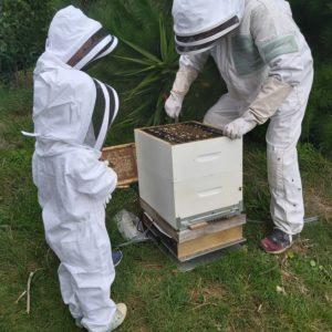 Beekeeper Protection