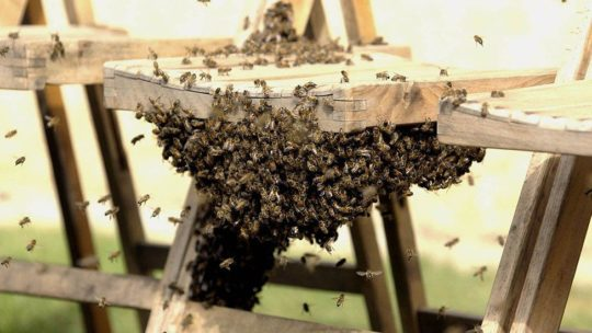 Here's a great job - Royal beekeeper