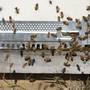 Hive Accessories